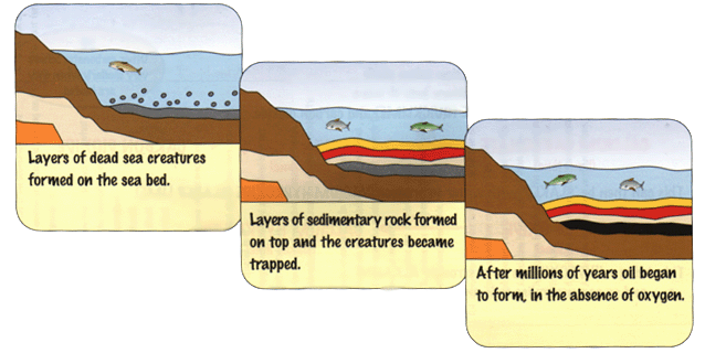 How crude oil is formed  - A-Level Geography - Marked by