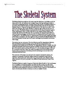 Skeleton Essay Template