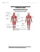 Anatomy and physiology of sport
