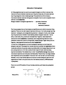 adenosine triphosphate essay Bottom of form previous ib exam essay questions: unit 1: cells use these model essay question responses to prepare for essay questions on your in class tests, as well as the ib examination, paper 2.