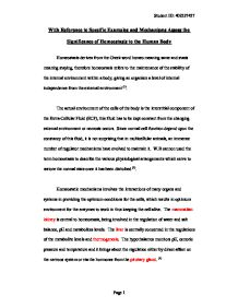 Essay on homeostasis in the human body