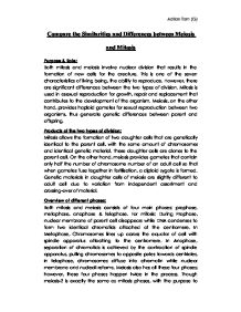 Different and similarities essay