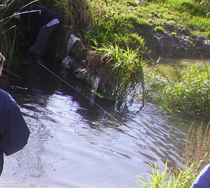 debden brook coursework