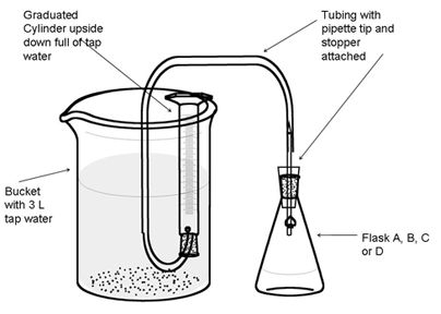 biology as coursework enzyme Biology snab coursework biology coursework: we can try the reaction of an enzyme with different substrates and this enzyme will just work well.