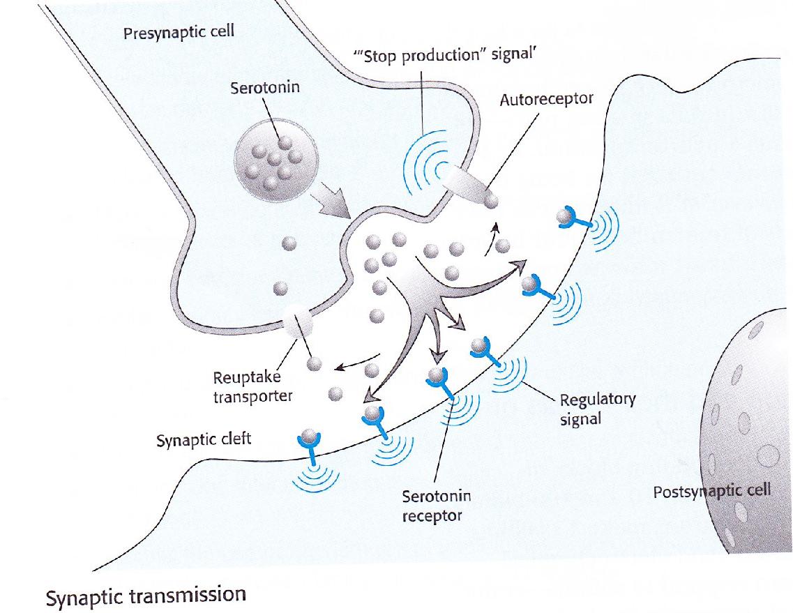 synapse diagram psychology