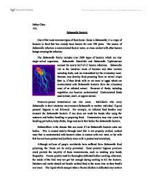 Salmonella essay